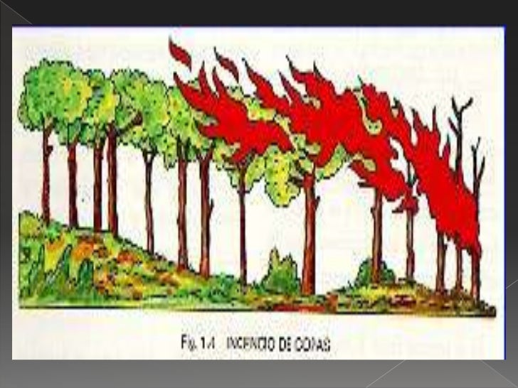 Copia De Causas Y Consecuencias De Los Incendios Forestales