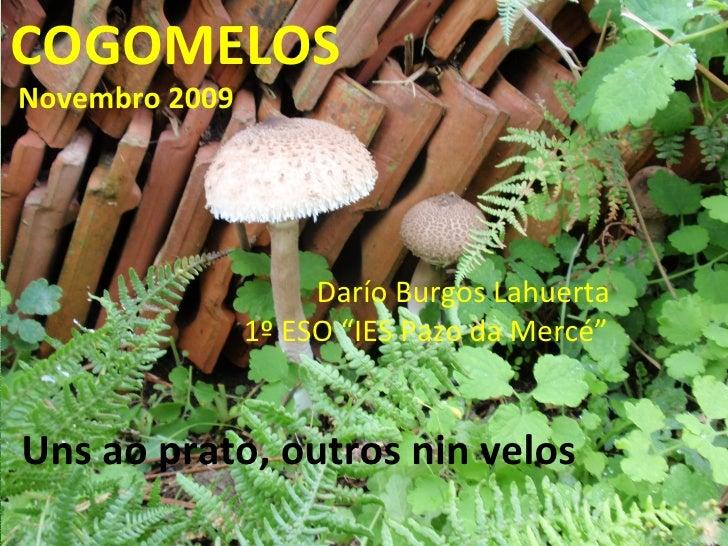 "COGOMELOS Novembro 2009 Darío Burgos Lahuerta 1º ESO ""IES Pazo da Mercé"" Uns ao prato, outros nin velos"
