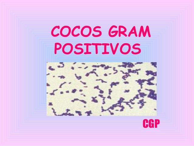 COCOS GRAM POSITIVOS  CGP