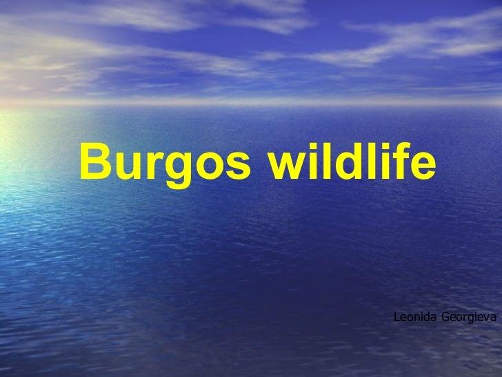 Burgos wildlife             Leonida Georgieva