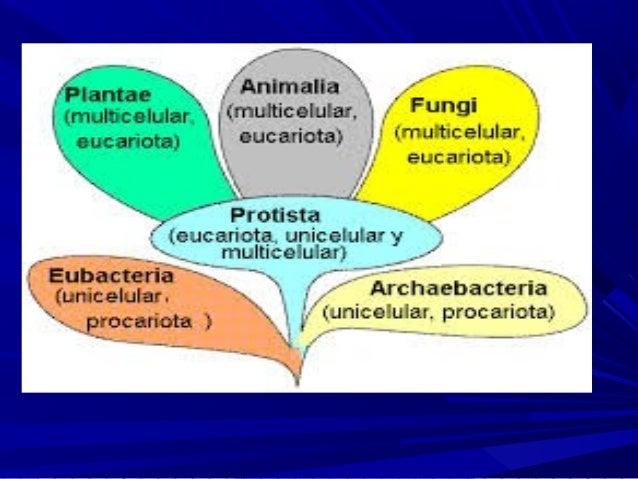 Copia de la celula y organelos