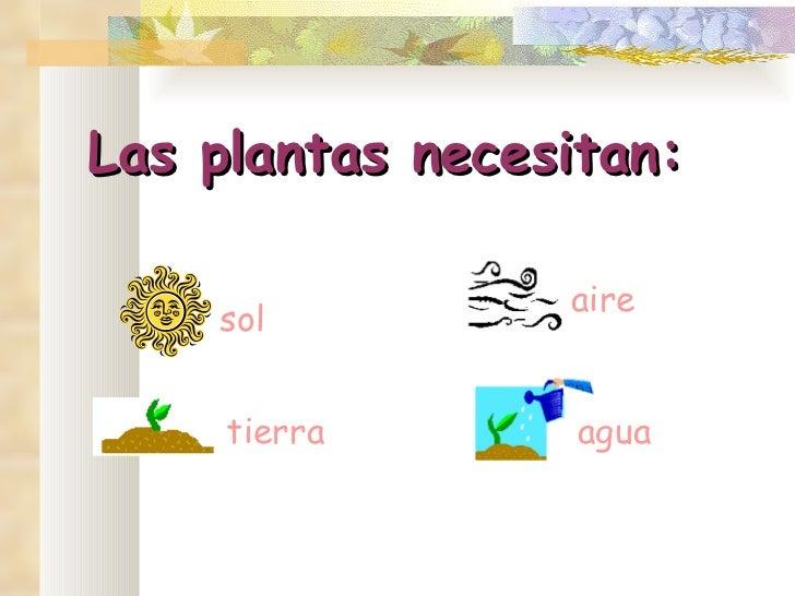 Las plantas for Plantas de exterior que no necesitan sol
