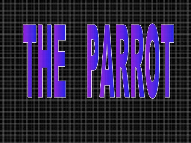 The parrot lives in the rainforest