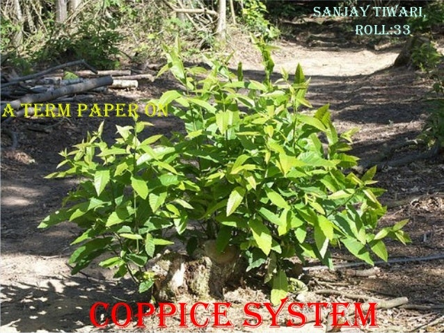 SAnjAy tiwAri, roll:33  A term pAper on  CoppiCe SyStem