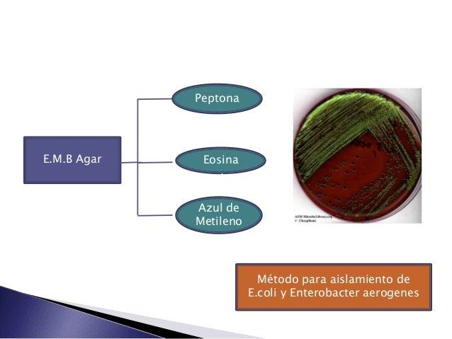 PeptonaE.M.B Agar    Eosina             Azul de             Metileno                          Método para aislamiento de  ...