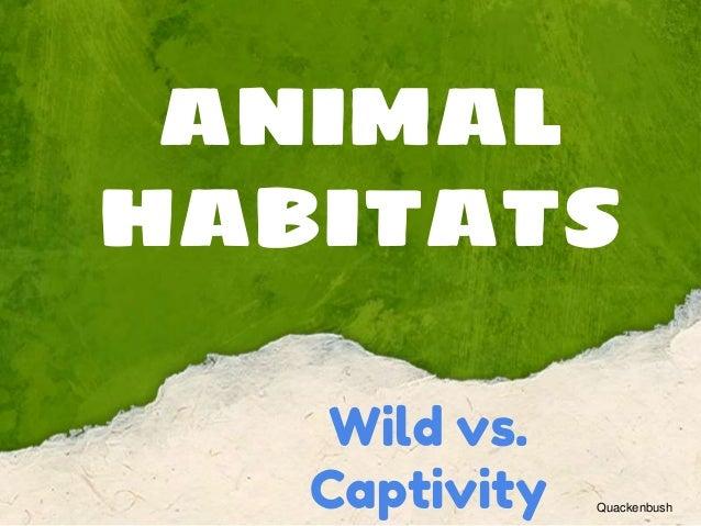 ANIMAL HABITATS Wild vs. Captivity Quackenbush