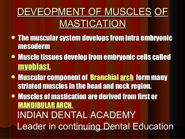 DEVEOPMENT OF MUSCLESDEVEOPMENT OF MUSCLES OFOF MASTICATIONMASTICATION  The muscular system develops from intra embryonic...