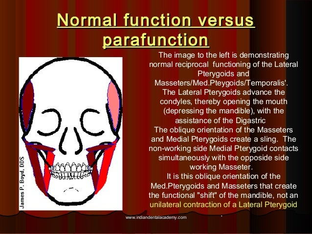 Normal function versusNormal function versus parafunctionparafunction The image to the left is demonstrating normal recipr...