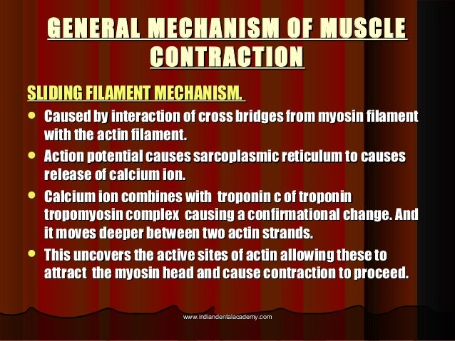 GENERAL MECHANISM OF MUSCLEGENERAL MECHANISM OF MUSCLE CONTRACTIONCONTRACTION SLIDING FILAMENT MECHANISM.SLIDING FILAMENT ...