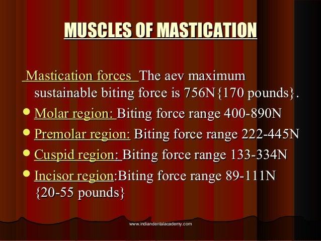 MUSCLES OF MASTICATIONMUSCLES OF MASTICATION Mastication forcesMastication forces The aev maximumThe aev maximum sustainab...