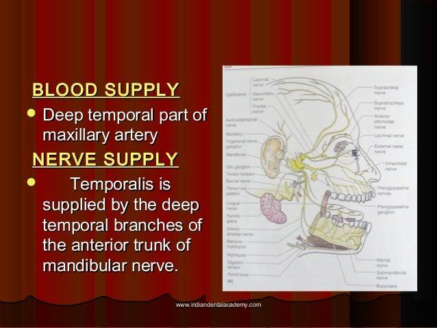 BLOOD SUPPLYBLOOD SUPPLY  Deep temporal part ofDeep temporal part of maxillary arterymaxillary artery NERVE SUPPLYNERVE S...