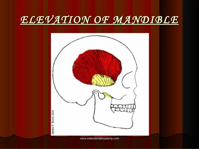 ELEVATION OF MANDIBLEELEVATION OF MANDIBLE www.indiandentalacademy.comwww.indiandentalacademy.com
