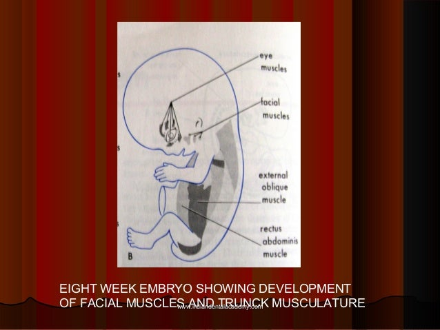 EIGHT WEEK EMBRYO SHOWING DEVELOPMENT OF FACIAL MUSCLES AND TRUNCK MUSCULATUREwww.indiandentalacademy.comwww.indiandentala...