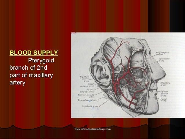 BLOOD SUPPLYBLOOD SUPPLY PterygoidPterygoid branch of 2ndbranch of 2nd part of maxillarypart of maxillary arteryartery www...