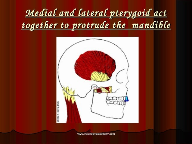 Medial and lateral pterygoid actMedial and lateral pterygoid act together to protrude the mandibletogether to protrude the...