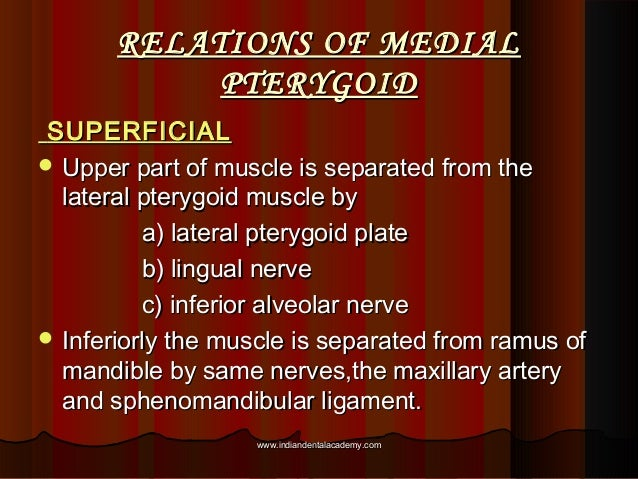RELATIONS OF MEDIALRELATIONS OF MEDIAL PTERYGOIDPTERYGOID SUPERFICIALSUPERFICIAL  Upper part of muscle is separated from ...
