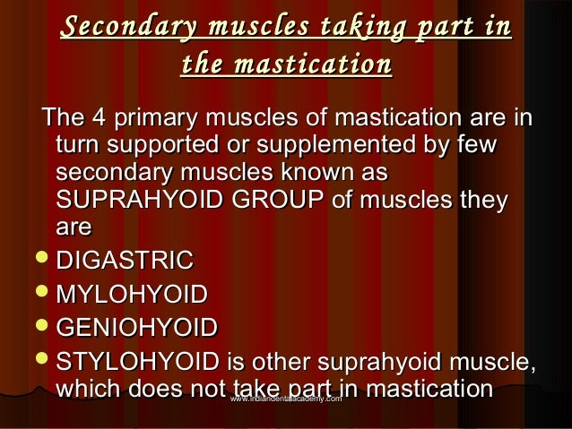Secondary muscles taking part inSecondary muscles taking part in the masticationthe mastication The 4 primary muscles of m...