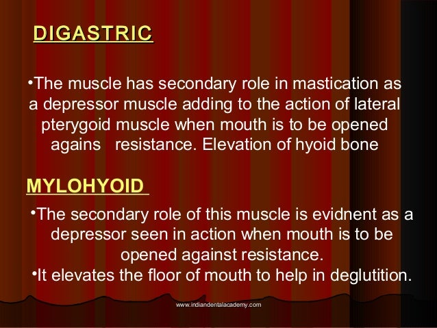 DIGASTRICDIGASTRIC •The muscle has secondary role in mastication as a depressor muscle adding to the action of lateral pte...