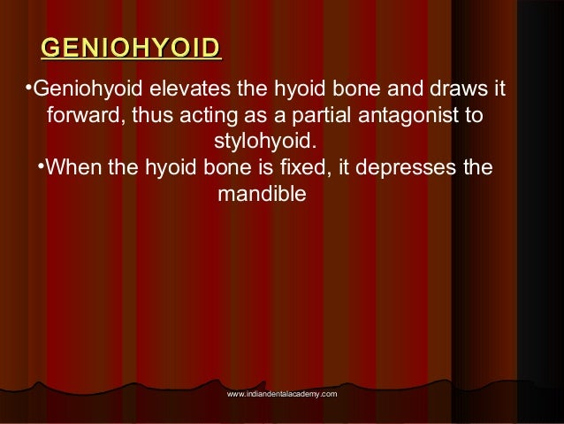 GENIOHYOIDGENIOHYOID •Geniohyoid elevates the hyoid bone and draws it forward, thus acting as a partial antagonist to styl...