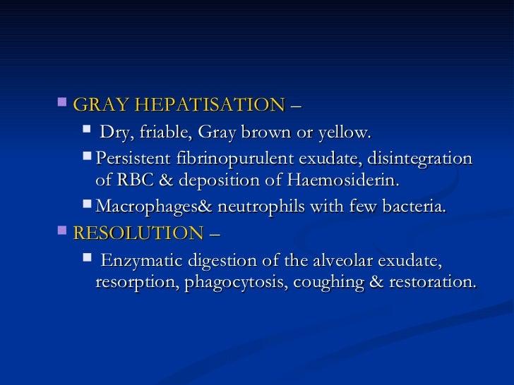 <ul><ul><li>GRAY HEPATISATION  – </li></ul></ul><ul><ul><ul><li>Dry, friable, Gray brown or yellow.  </li></ul></ul></ul><...