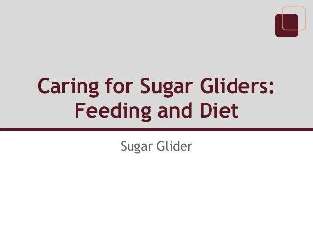 Caring for Sugar Gliders:    Feeding and Diet        Sugar Glider