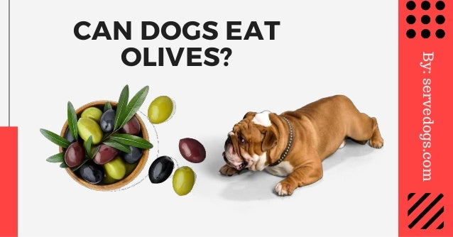 CAN DOGS EAT OLIVES? By:servedogs.com
