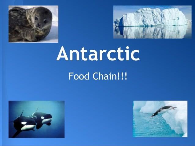 Talia 39 s antarctic food chain for Antarctic cuisine
