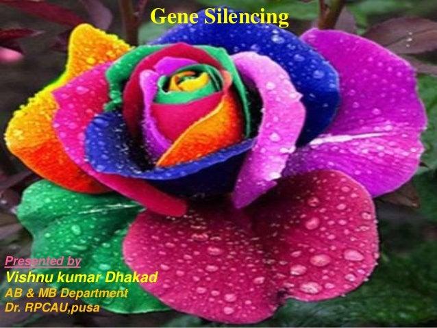 Gene Silencing Presented by Vishnu kumar Dhakad AB & MB Department Dr. RPCAU,pusa
