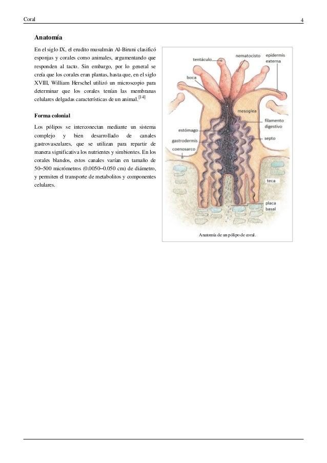 Excelente Anatomía De Coral Patrón - Anatomía de Las Imágenesdel ...