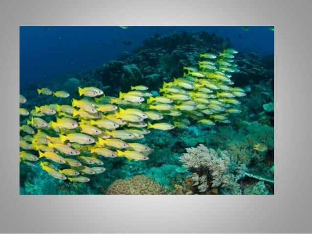 cleaner wrasse and reef fish relationship to humans