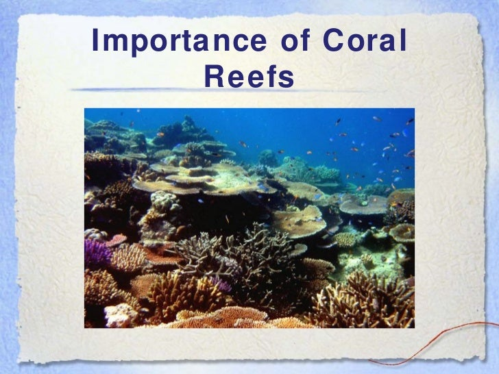 How Pollution Affects Coral Reefs
