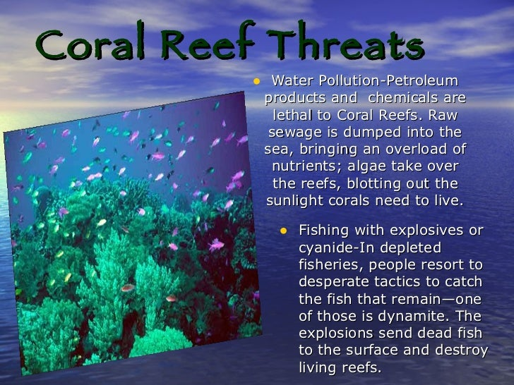 How does climate change affect coral reefs?