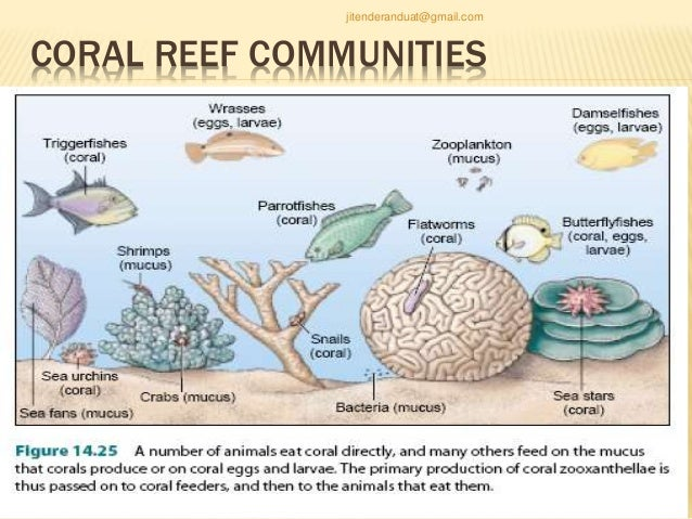 Coral Ecology Ppt