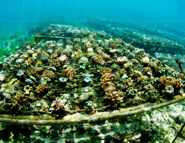 Pilot Project 1: Coral mariculture will continue to emerge as an environmentally and economically sustainable practice acc...