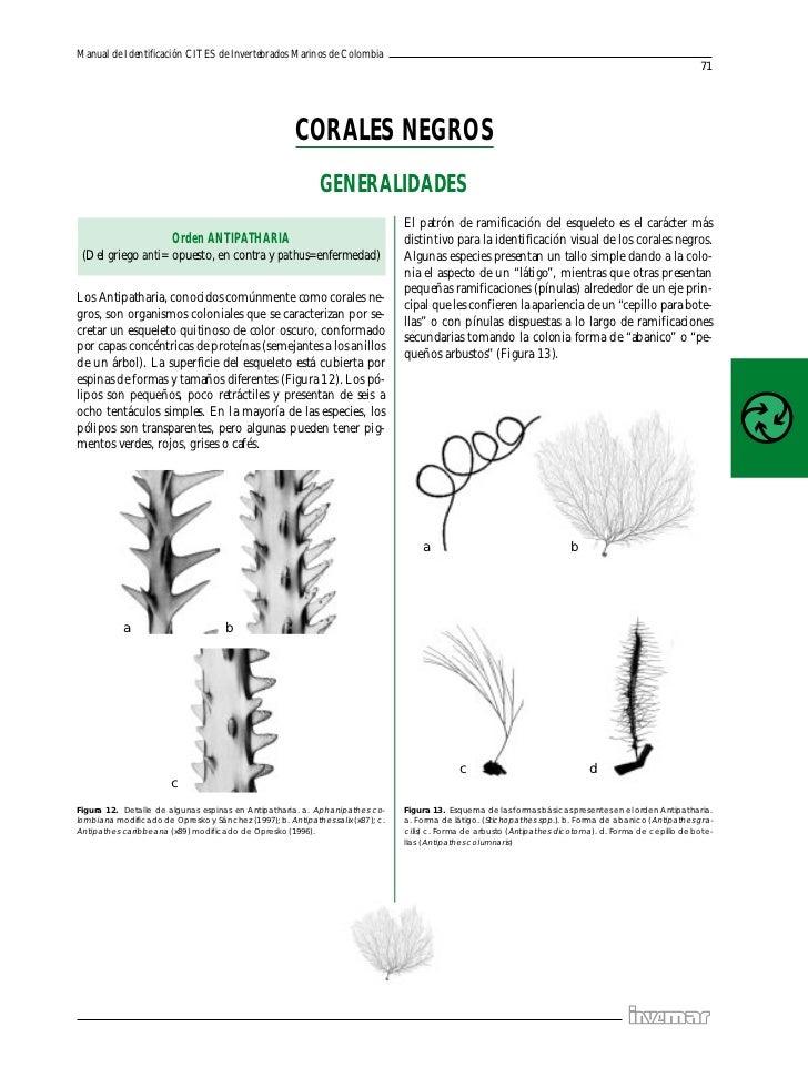 Manual de Identificación CITES de Invertebrados Marinos de Colombia                                                       ...