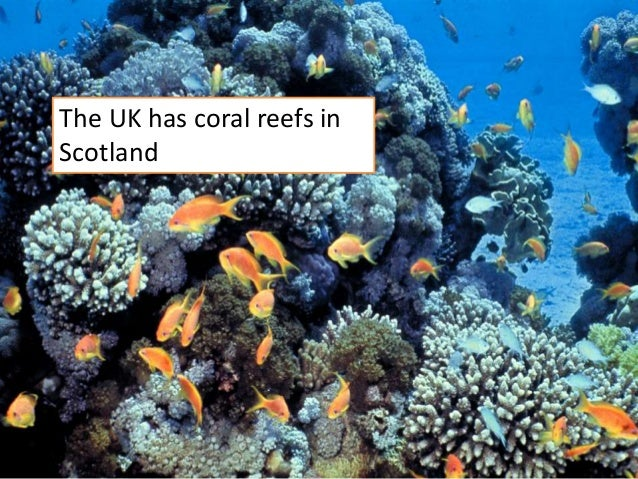 decline of coral reefs academic writing Coral reefs are valuable resources and are of tremendous economic value they function in shoreline protection, support our fisheries and support our tourism-based economy like many places worldwide, pressures on our reefs are growing year by year and we are noticing a decline in the integrity of our reefs.