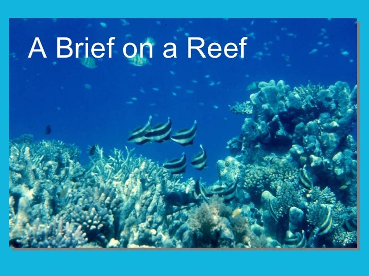 A Brief on a Reef