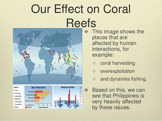 an analysis of the causes of destruction among the coral reefs Members of the climate central staff and board are among the most respected leaders in climate science coral deaths threaten coasts with erosion, flooding by john upton salt marshes have similar effects as coral reefs, the analysis showed.