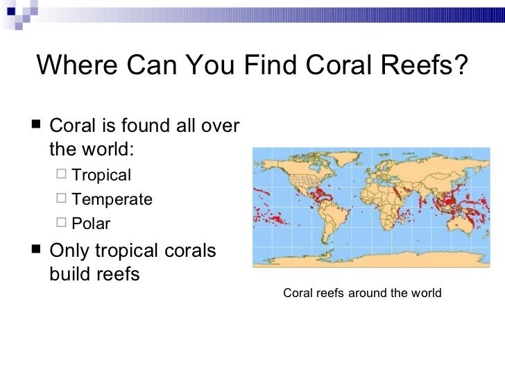 Coral Reef Ecosystem - Background Information