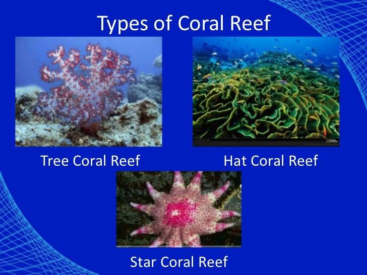 Coral reef presentation.