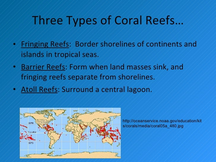 the three types of reefs Several different types of reefs are found within the great barrier reef marine park this aerial photograph shows how the reefs get farther from the mainland as you move south.