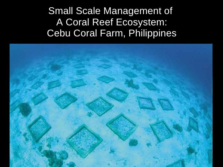 management strategy ofcafe de coral Global warming causes coral bleaching as part of an ecosystem-based management strategy for coral reefs appears chancerelle, t lison de loma, l.