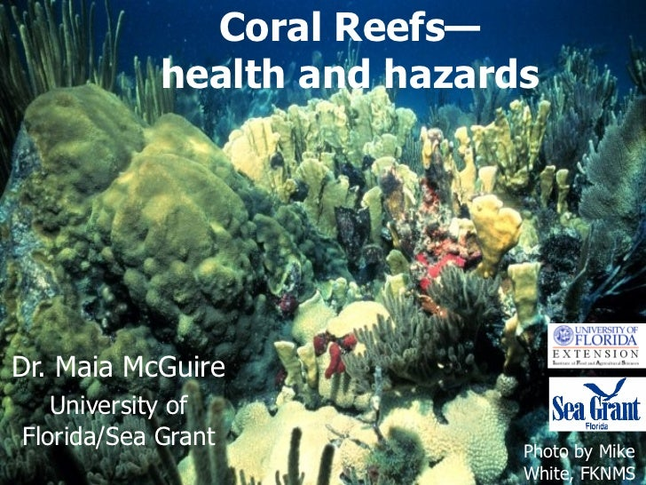 Coral Reefs—health and hazards Dr. Maia McGuire University of Florida/Sea Grant Photo by Mike White, FKNMS