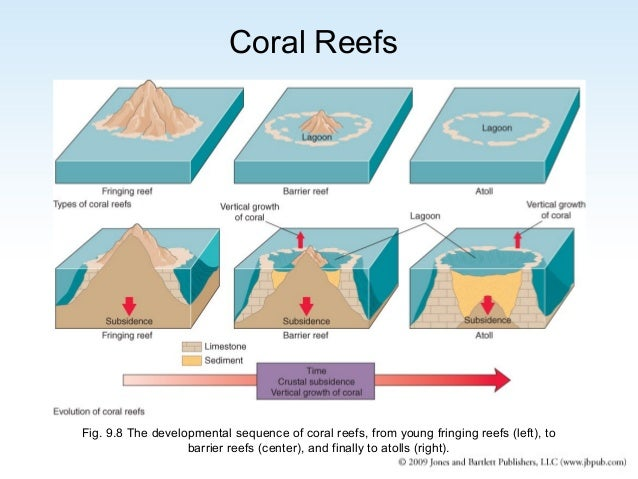 the basic categories and structure of coral reefs Corals and coral reefs there are two types of sexual it could even break apart the existing skeletons that already provide the structure for reefs.