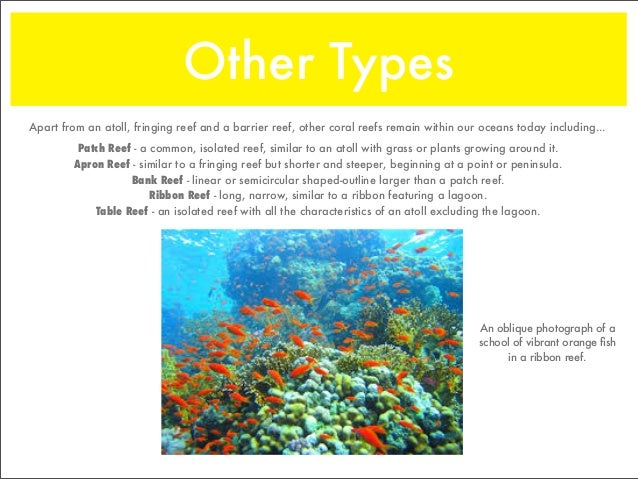the three types of reefs Three main types of reefs are fringing reefs, barrier reefs and atolls (veron, 2000) fringing reefs fringing reefs are coral reefs that grow in shallow waters they closely border the coastline or are separated from it by a narrow stretch of water many of the reefs round sri lanka and thailand are fringing reefs barrier reefs.
