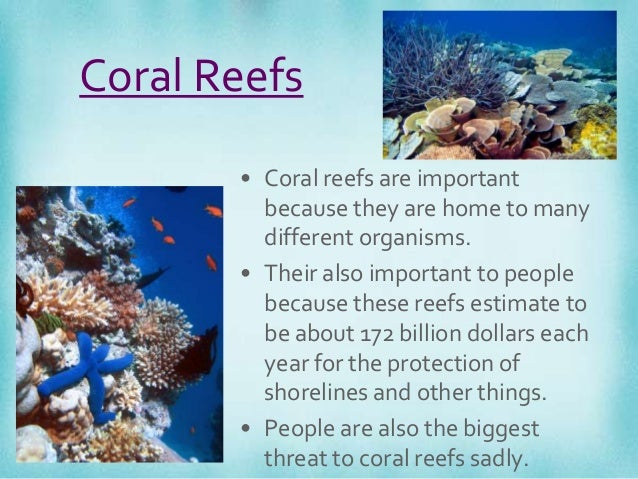 the role and importance of coral reefs The coral reef food web: play a major role in primary production on coral reefs and of the importance of cyanobacteria to coral reef ecology is.