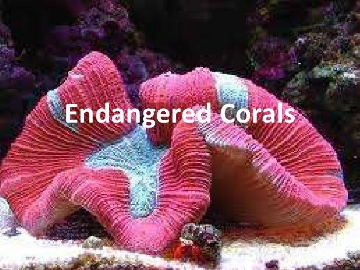Endangered Corals