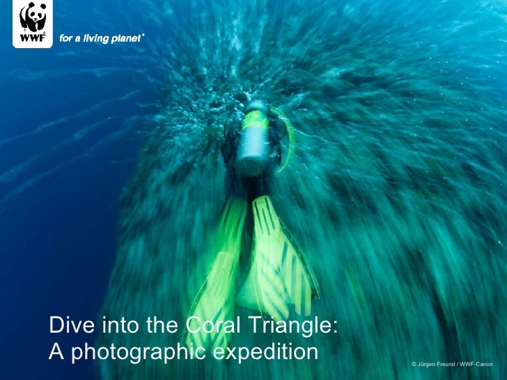 © Jürgen Freund / WWF-Canon Dive into the Coral Triangle: A photographic expedition