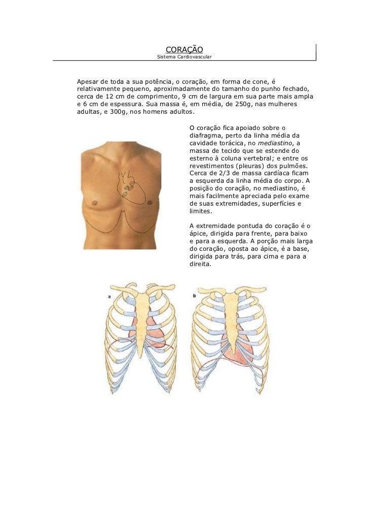 CORAÇÃOSistema Cardiovascular<br />Apesar de toda a sua potência, o coração, em forma de cone, é relativamente pequeno, ap...