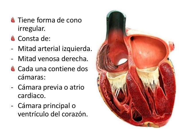 Corazon Animales